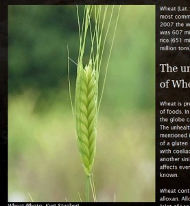 Snapshot - Article on wheat