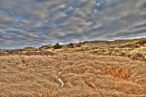 HDR - A Moore Field in Winter